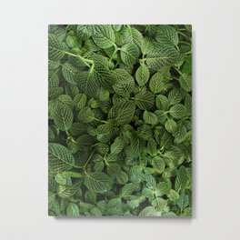 Leafs of Green (Color) Metal Print