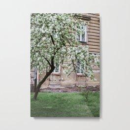 Spring Tree Blossoming In Krakow Metal Print