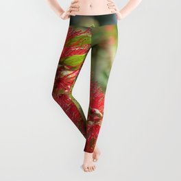 Calliandra Haematocephala Red Powderpuff  Leggings