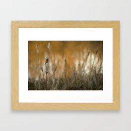 Reeds Framed Art Print