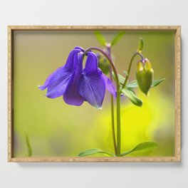 Purple Columbine In Spring Mood Serving Tray