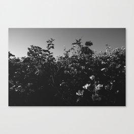 Bushes Canvas Print