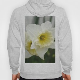 White and yellow daffodils, early spring flowers Hoody