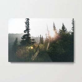 Sunny Forest II Metal Print