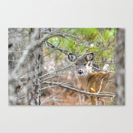 Assateague Sika Deer Canvas Print