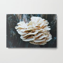 Rose like mushroom on old tree Metal Print