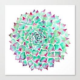 Echeveria Succulent Canvas Print