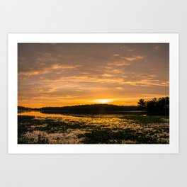 Sunset and Lily Pads Art Print