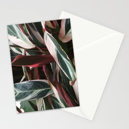 Shades in summer Stationery Cards