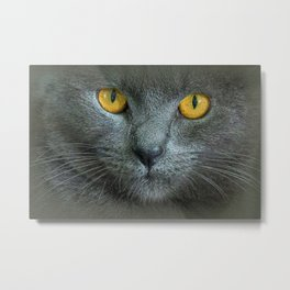 THE LOVE OF CATS Metal Print