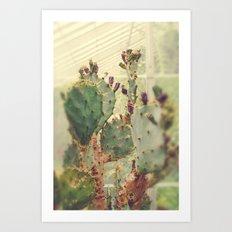 Glass House Cactus Art Print