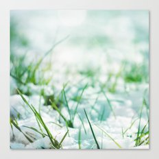 Frosted Morning; Canvas Print
