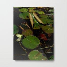 Waterlily #4 Metal Print