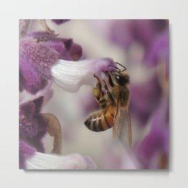 Worker Bee on Mexican Sage Metal Print