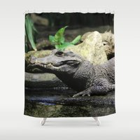 crocodile Shower Curtains featuring Crocodile by Falko Follert Art-FF77