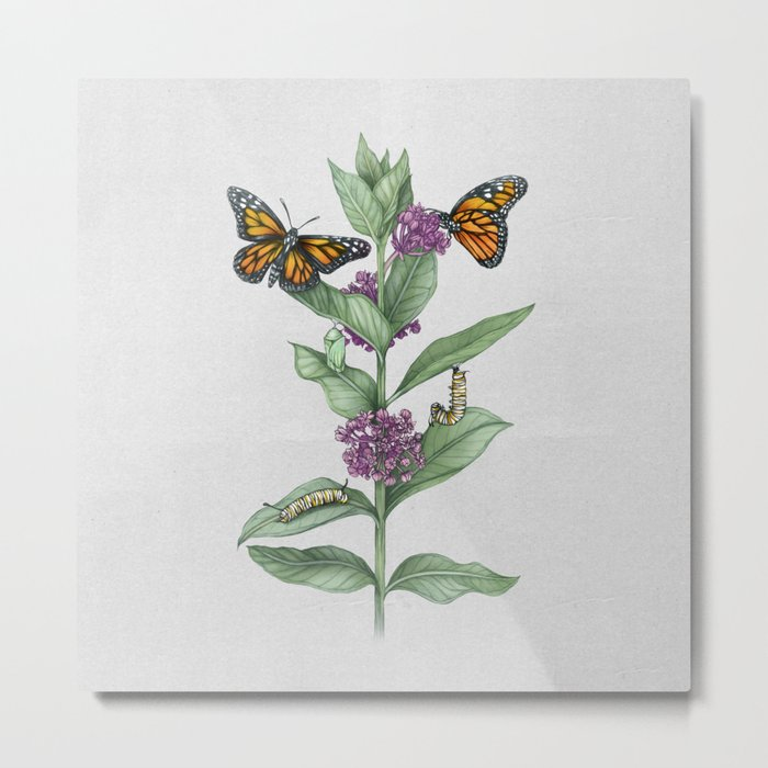 Monarch Butterfly Life Cycle Metal Print