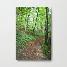 Into The Woods - Woodland Spring Path Metal Print