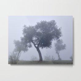 Old olives full of history. Foggy morning. Granada. Spain Metal Print