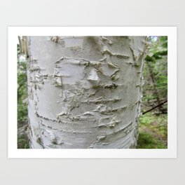 Birch Bark Art Print