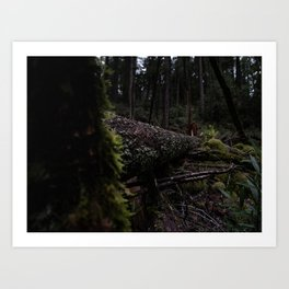 Tree fell in the forest. I didn't hear anything. Art Print