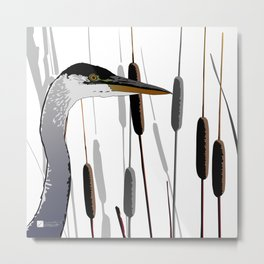Great Blue Heron - White Background Metal Print