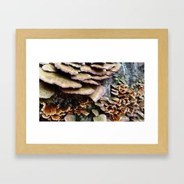 Bumps on a Log Framed Art Print