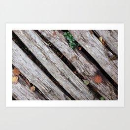 Rustic wooden walkway Art Print