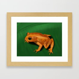 Golden toad Framed Art Print