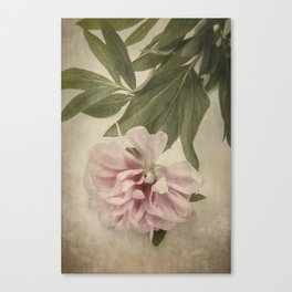 Scents of Spring - Pink Peony i Canvas Print