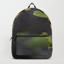 Fagus Backpack