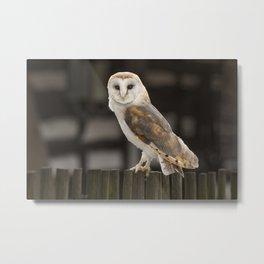 Barn Owl Metal Print