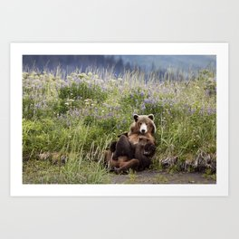 Momma Bear Nursing in the Lupines Art Print