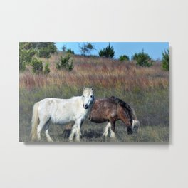 Miniature horses Metal Print