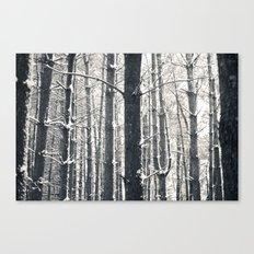 Snowy Pine Grove Canvas Print