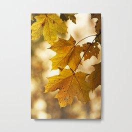 Yellow (Maples) Metal Print