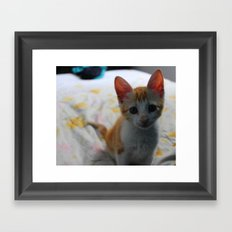 ORANGE CAT. Framed Art Print