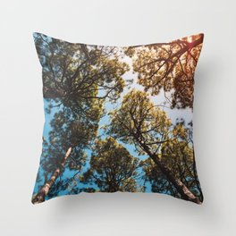 Trees and sky in sunlight- forest landscape - nature photography Throw Pillow