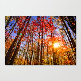 A Forest of Fall Foliage in the Great Smoky Mountains Canvas Print