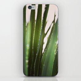 Sunlit Awakening iPhone Skin