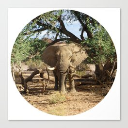 Voortrekker the Elephant Canvas Print