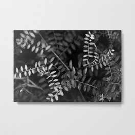 Black and white nature Metal Print