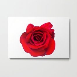 isolated red rose Metal Print