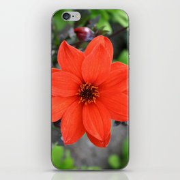 Flower in BC iPhone Skin
