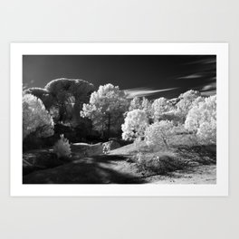 Infrared wood Art Print