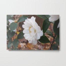 White Camellias Rampant Metal Print