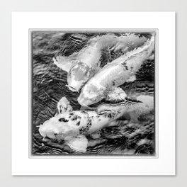 Taiwan, Three Carp Swimming in a Pond Canvas Print