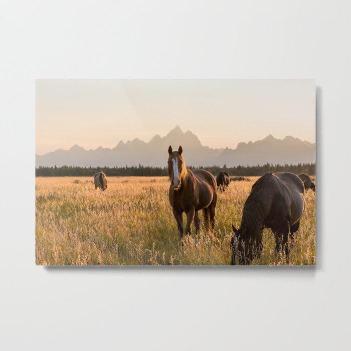 Horses Grazing Below the Tetons Metal Print