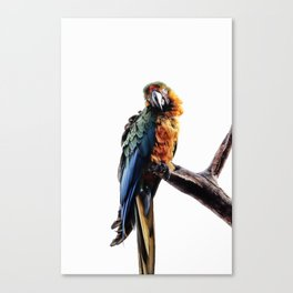 Take My Picture Canvas Print