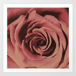 salmon rose Art Print