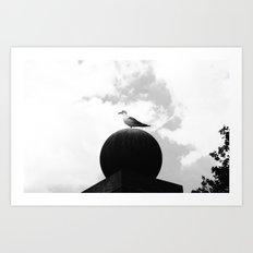Seagull 2 Art Print